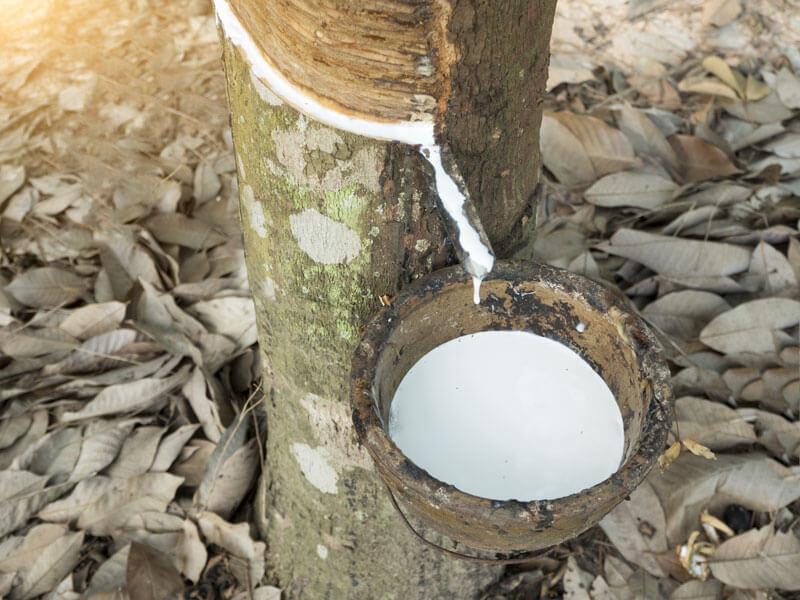 Materasso Lattice Naturale Con Fodera In Bio Cotone 160 190 200 H20 Cm Ecobioemporio Toccasana Bioedilizia